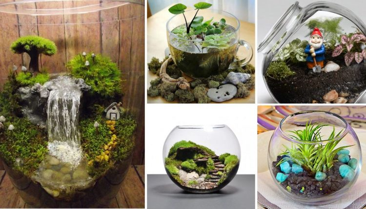 Reliable Platform to Make Terrarium in Singapore
